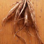При болях в суставах помогает корень лопуха