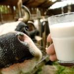 Народные рецепты лечения молоком