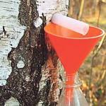 Лосьон из березового сока